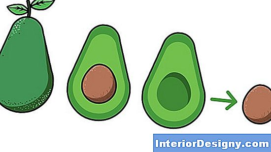 Come Piantare Un Albero Di Avocado A 5 Galloni