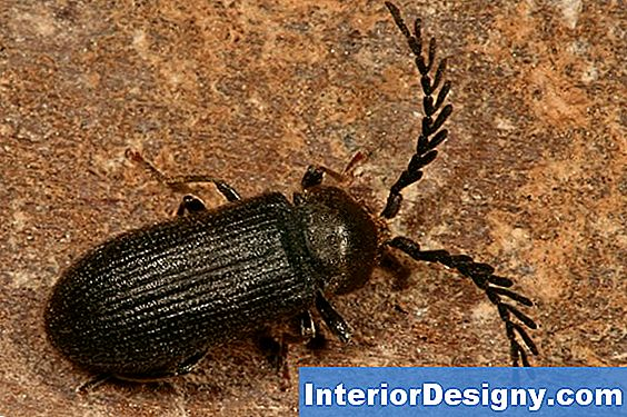 Bark Beetle Repellent