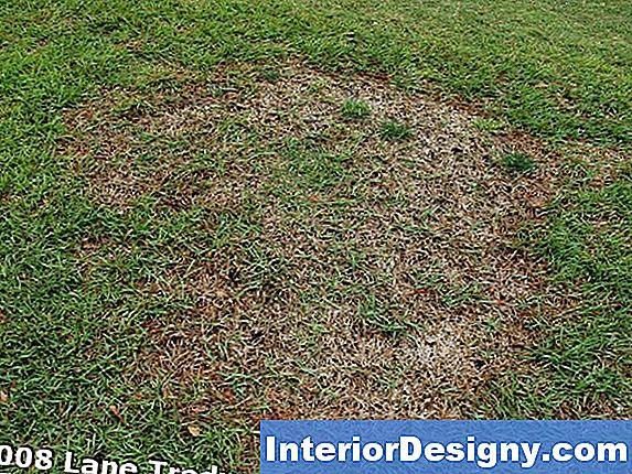 Centipede Grass Insects & Disease