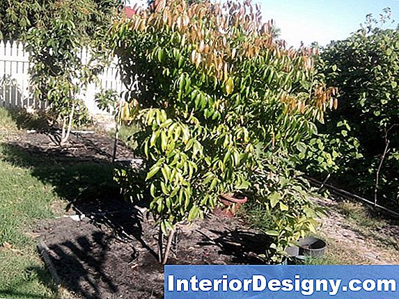 The Best Dwarf Fruit Trees