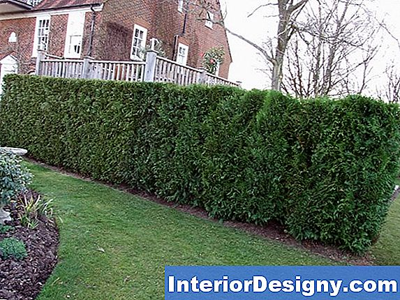 Cedar Hedge Care
