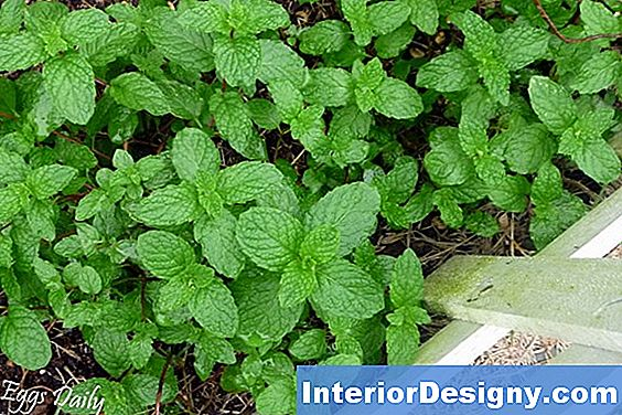 Insect-Deterrent Ground Cover Plants