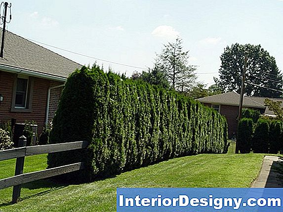 Juniper Bushes For Privacy Screen