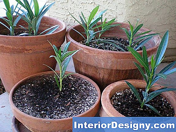 Oleander Clippings And Toxic Compost