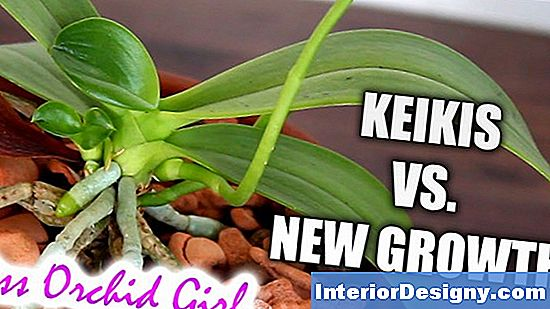 Orchid Keiki Care