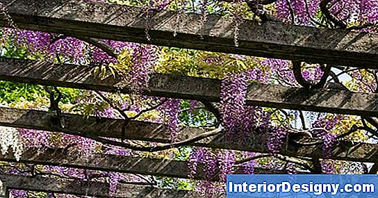 Wisteria Colors