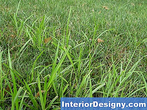 Nutgrass Vs. Crabgrass
