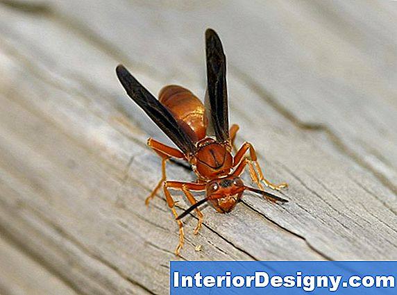 Red Wasp Repellent