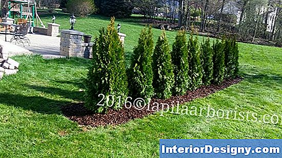 Arborvitae Deer Damage