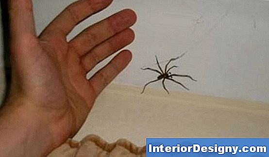 Natural Spider Repellents Vs. Keemilised Repellendid