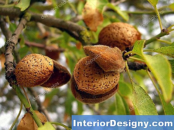 Walnut Vs Hickory Nut