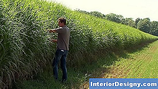 Mis On Miscanthus Rohi?