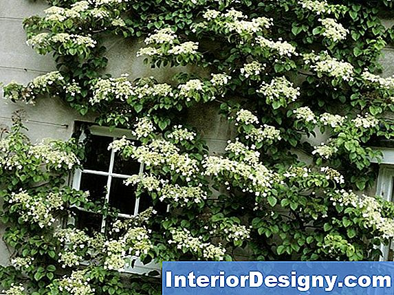Comment Tailler Un Hortensia Everblooming