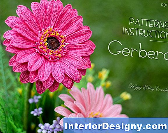 È Un Gerbera Daisy Pet-Friendly?
