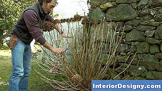 Potatura Vs. Deadheading Per Le Ortensie