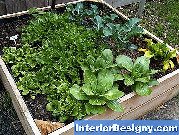 The Spacing In Square Feet For Celery Gardening