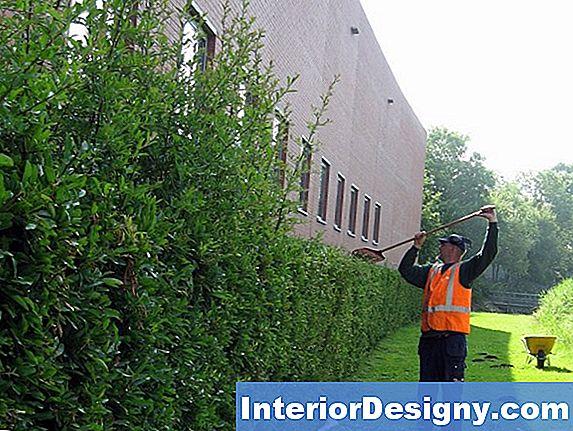 tuin: hoe liguster recurve te snoeien - 2019   nl.interior-designy
