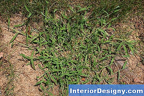 Pre-Emergent Herbicide Chemicals For Crabgrass