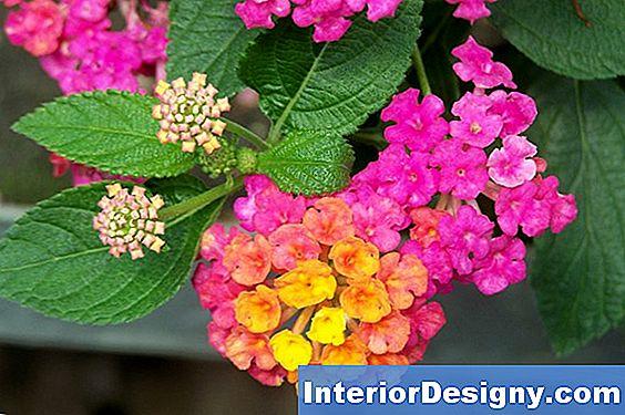 Tuin diy betonnen tuinvijver nl erior designy