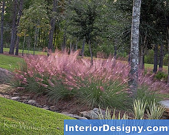 Ornamental Grass For Personvern