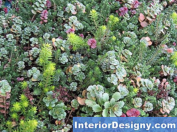 Green-Roof Plants List