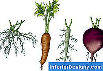 Fiber Root & Taproot Systems Eelised