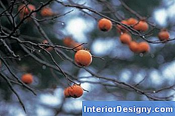 Ornamental Trees With Berries